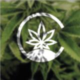 bitcannabis.pl